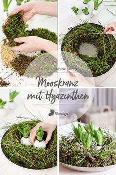 Moss wreath with hyacinths - decoration idea for the winter months - Decoration idea for Easter hyacinth wreath Informations About Mooskranz mit Hyazinthen – Dekoidee - Summer Decoration, L Wallpaper, Moss Wreath, Fleurs Diy, Arte Floral, Winter Months, Happy Easter, Flower Arrangements, Wreaths