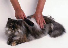 Aunque los gatos son animales muy aseados que se limpian solos, es conveniente ayudarles en el cepillado para eliminar el pelo muerto y prevenir problemas de salud. Veamos los tipos de cepillos que hay y aprendamos a utilizarlos correctamente.