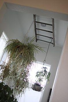 Ladder plant hanger