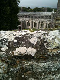 Lush lichen in St Davids