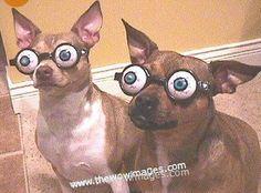 Mr and Mrs. googli eyes