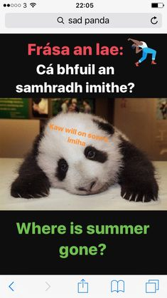 Panda Bear, Irish, Memes, Irish Language, Meme, Panda, Ireland, Pandas