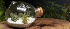 glass blown terrarium