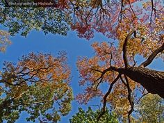 Canopy of Color   #photography #card #print #canvas #nature #autumn #Fall #foliage #tree #leaves