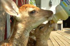 Jack's Journal: Wildlife Rehabilitator - Northern Michigan's News Leader