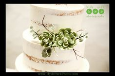 Beautiful green succulents decorated the naked wedding cake at this @villaantonia wedding! Photo by Austin wedding photographers @hydeparkphoto. See more on the wedding blog at http://www.hydeparkphoto.com/?s=maggie || Austin Weddings, Texas Weddings, Austin Wedding Venues, Austin Wedding Venues Outdoors, Villa Antonia, Texas Hill Country, Austin Wedding Chapel, Wedding Succulents, Austin Wedding Photographers, Texas Wedding Photographers, Wedding Cake, Succulent Wedding Cake, Naked Wedding…