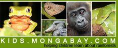 Monkey frog in Peru, Owl butterfly in the Amazon, Shoebill in Uganda, infant lowland gorilla in gabon, green python in Borneo