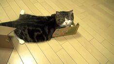 いろいろな箱とねこ2。-Many boxes and Maru2.-