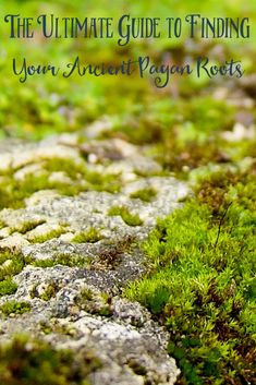 The Ultimate Guide to Finding Your Ancient Pagan Roots - The Witch of Lupine Hollow Witchcraft For Beginners, Traditional Witchcraft, Which Witch, Roman Gods, Spiritual Path, Spiritual Awakening, Kitchen Witch, Book Of Shadows, Gods And Goddesses