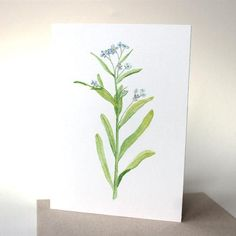 This beautiful set of cards features a watercolor image I painted of a forget-me-not flower (myosotis) that I picked on a nature walk. In French, it is referred