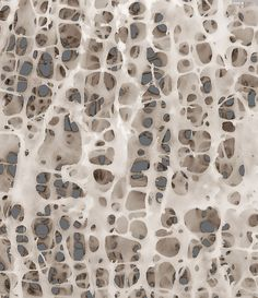 Bone Architecture l This bone structure texture is an organic way in which I can reflect the structure of a woman. Organic Structure, Natural Structures, Organic Shapes, Patterns In Nature, Textures Patterns, Nature Pattern, Theme Design, Texture Art, Sea Texture