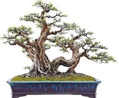 Bonsai Art and Ideas Shared :  More At FOSTERGINGER @ Pinterest