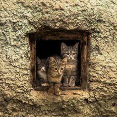 Three kittens.