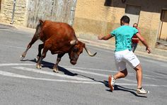 Santacara: Vacas Hermanos Marcen (5) Running, Cows, Siblings, Racing, Keep Running, Jogging, Lob