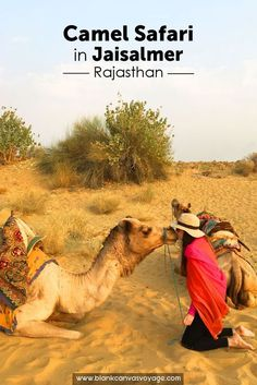 Sleeping in the Desert without a tent? YES! Our Camel Safari in Jaisalmer was incredible. Best Camel Safari in Jaisalmer, Camel Safari Tips and a photographic journey.