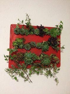 Reutilizando un marco de serigrafía y plantando suculentas !!!