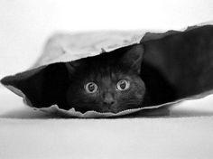 Shy cat.