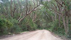 Minha Trilha! Rio vermelho Florianópolistrilha - SC. Créditos:Raque Carneiro.