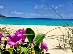 The Gouverneurs Beach last week in StBarts