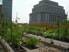 Carrot City - Fairmont Hotels Rooftops
