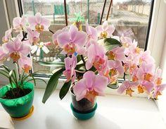 205 отметок «Нравится», 30 комментариев — myflowers (@irina_my_flowers) в Instagram: «Вот такая красота расцвела в этом году у моей мамы💮🌸, пышно и нежно. Названия не знаю, буду…»