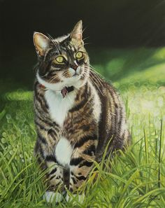 Realistic Portraits by Maria Bozina. Maria works in her home studio in Wellington, New Zealand. Maria Bozina is a New Zealand artist. Canvas Size, Oil On Canvas, Cool Things To Make, New Zealand, Studio, Gallery, Cats, Drawings, Artist