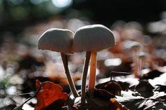 #Pilze in der #Sonne im Herbstwald bei #München