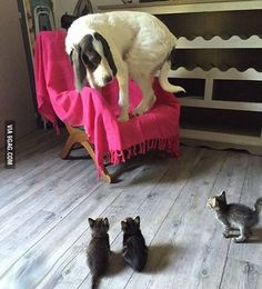 Little kittens can be very scary. #9gag @9gagmobile