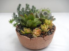 Beautiful living arrangement in a rustic by RotdCreations on Etsy, $30.00 Cement Planters, Unique Gardens, Terracotta, Succulents, Succulent Ideas, Rustic, Plants, Etsy, Beautiful