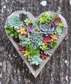 wooden heart planter filled with succulents - Google Search