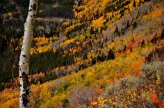 Amazing View of Fall Colours in Colorado