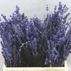 Buy Dried Lavender at wholesale prices and direct doorstep delivery in mainland UK. Wholesale Florist, Florist Supplies, Lavandula, Vintage Weddings, Table Plans, Buttonholes, Wedding Bouquets, Triangle, Lavender