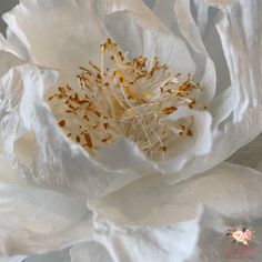 """My beautiful Renkaku """"flight of cranes"""" Japanese Tree Peony. This beauty is about 7 inches in diameter. #paperflowers #papercraft… Big Paper Flowers, Paper Peonies, Diy Flowers, Paper Art, Paper Crafts, Japanese Tree, Tree Peony, Crepe Paper, Ikebana"""