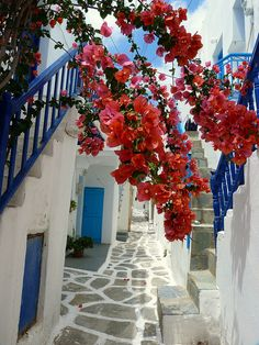 Lane and bougainvillae Narrow paved alley and bougainvillae. Naoussa, Paros island, Cyclades, Greece
