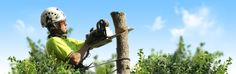 The Qualities Of Services Of Tree Lopping In Sydney