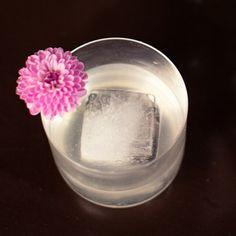 vodka + elderflower gimlet