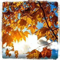 Γη και Ελευθερία.: Η θαμπωμένη χώρα. Poetry, Clouds, Blog, Outdoor, Outdoors, Blogging, Poetry Books, Outdoor Games, Poem
