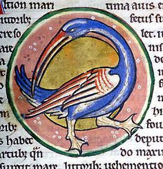 Medieval Bestiary : Kingfisher Gallery