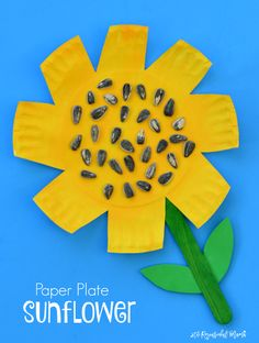 Kids work on scissor skills while making this paper plate sunflower craft. fall|preschool|kindergarten|summer|kid craft|fine motor skills