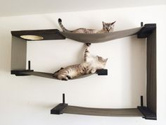 I just adore these cat shelves! They're like art for you and a jungle gym for your cats! :) Handmade Unique: Unique for You and Your Cat : Modern, Sculptural Cat Shelves by CatastrophiCreations – Grand Rapid, Michigan handmadeunique. Crazy Cat Lady, Crazy Cats, Cool Cats, Cat Wall Shelves, Floating Cat Shelves, Hanging Shelves, Cat Hammock, Cat Room, Curious Cat