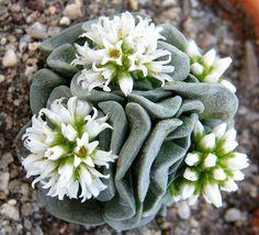 Flores de suculentas que te sorprenderán y encantarán                                                                                                                                                                                 Más
