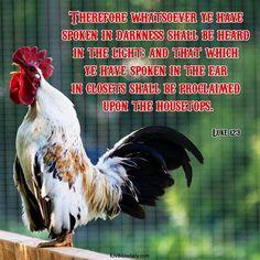 Bible Verses Kjv, Luke 12, Dark, Animals, Animales, Animaux, Animal, Animais