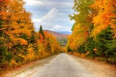 Peak Color in Maine | White Mountain National Forest in Maine Fall Foliage