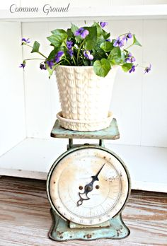 violets and old scale ~~ from Common Ground: Organizing the Potting Bench and other backyard business...