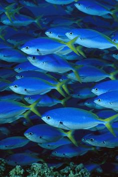 under the sea Underwater Creatures, Underwater Life, Colorful Fish, Tropical Fish, Tropical Animals, World Disney, Disney Animal Kingdom, Fauna Marina, Wale