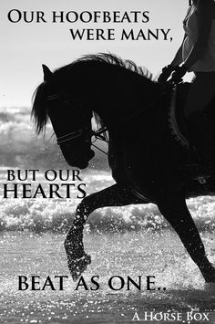 Our Hoofbeats may vary but our hearts beat as one. #love #horses #quote
