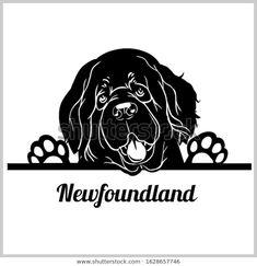 Golden Retriever Gifts, Terra Nova, Newfoundland Puppies, Puppy Images, San Bernardo, Boxer Dogs, Boxers, Wood Burning Patterns, Dog Store