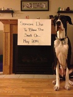 27 perfect pregnancy reveals starring the family pet Baby Number 2 Announcement, Pregnancy Announcement To Husband, Pregnancy Announcements, Pregnancy Tips, Pregnancy Photos, Crime, Pregnant Dog, Great Dane Dogs, Newborn Pictures