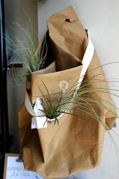 Sacco in fibra di cellulosa con piante di Thillandsia......  #fibradicellulosa #saccodifibra #sacco #design #scottiverdesign