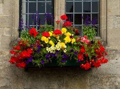 Window Box Plants, Window Box Flowers, Balcony Flowers, Window Planter Boxes, Flower Planters, Flower Boxes, Garden Planter Boxes, Exotic Plants, Amazing Flowers